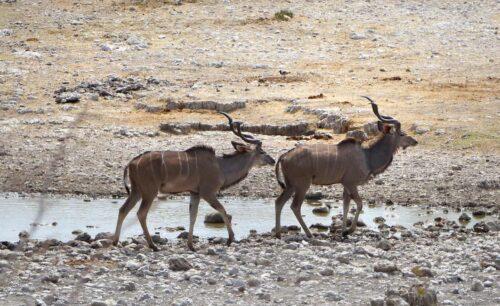 Kudu Self Drive