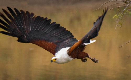 Fish Eagle Self Drive