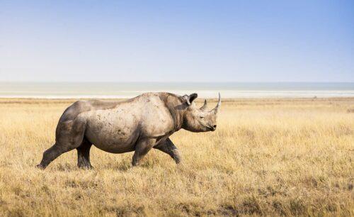 Rhino Self Drive