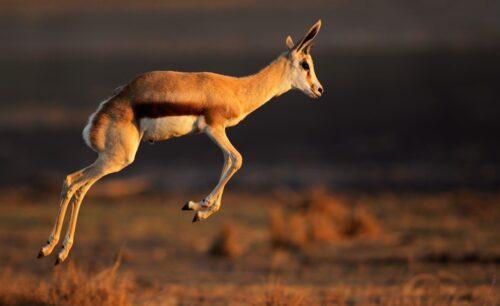 Springbok Self Drive